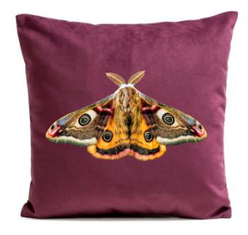 giant-peacock-moth-prune